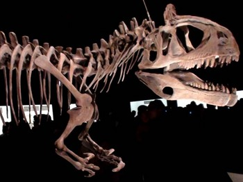 クリオロフォサウルス.JPG