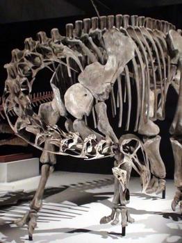 ニジェールサウルス.JPG