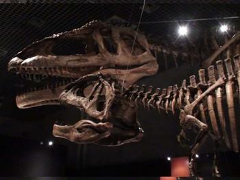 マプサウルス.JPG