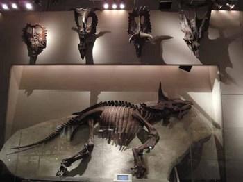 国立科学博物館B1F#1トリケラロプス.JPG