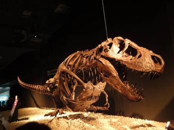 恐竜展0016.JPG