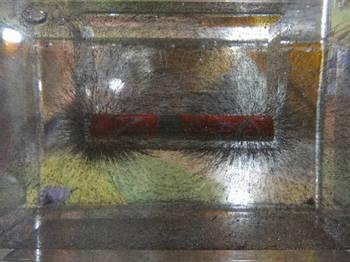 立体磁界観察槽0005.JPG